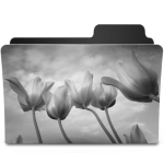 Tulips Black&White